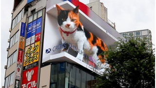 「巨大猫」3D動画、クロス新宿ビジョン