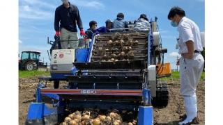 YUIME、富山県砺波市 「玉ねぎ」の収穫と調整作業の様子